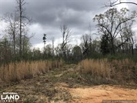 Hunting And Timber Investment Tract : West : Holmes County : Mississippi