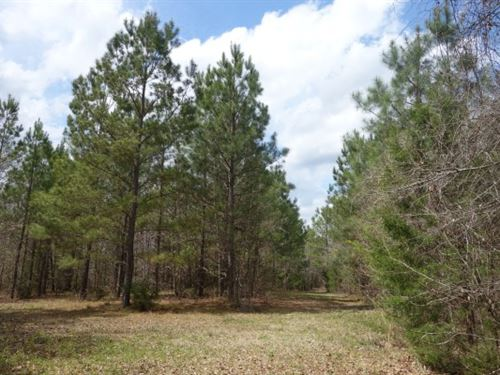 72 Acres - Fairfield County, Sc : Winnsboro : Fairfield County : South Carolina