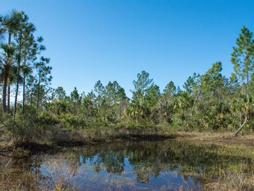 Honey Hole Ranch In Mims, Florida : Mims : Brevard County : Florida