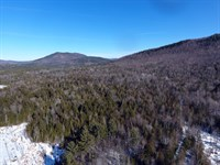 Bibby Mountain Forest : Chester : Warren County : New York