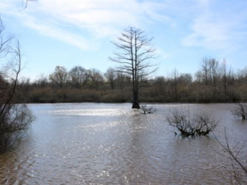 622 Acres In Neshoba County In Phil : Philadelphia : Neshoba County : Mississippi