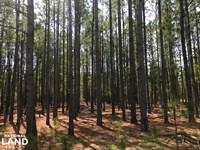 Weeks Road Recreational Timberland : Williston : Aiken County : South Carolina