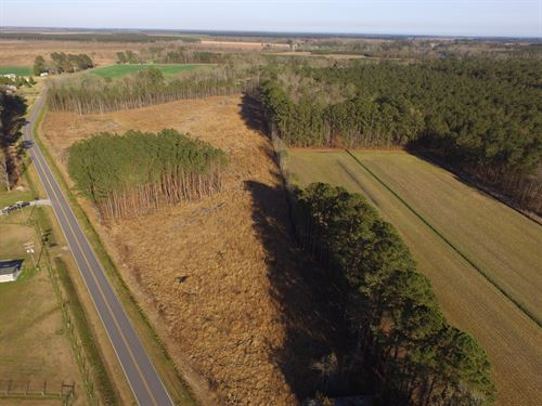 Hunting/Timber Tract For Sale Bath : Bath : Beaufort County : North Carolina