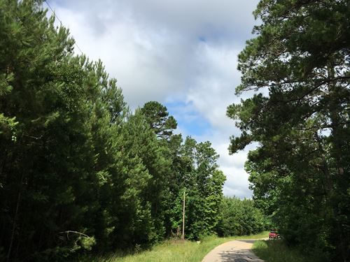 22 Acres Wheatfield Branch : Oakhurst : San Jacinto County : Texas