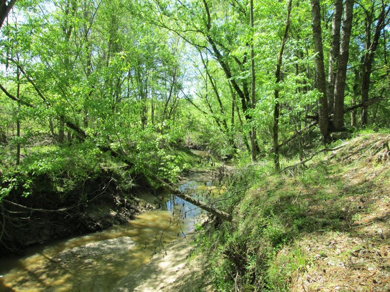 Great recreational tract for sale ranch for sale utica for Ranches for sale in mississippi