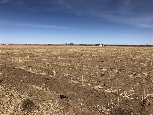 Cherry Road Farm South 40 : Boone : Pueblo County : Colorado