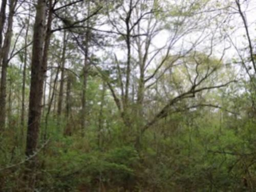 24.6 Acres In Lamar County In Purvi : Purvis : Lamar County : Mississippi