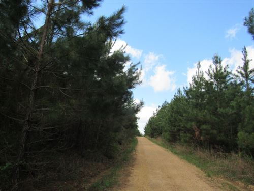 174 Acres Of Pine Plantation : Bogue Chitto : Lincoln County : Mississippi