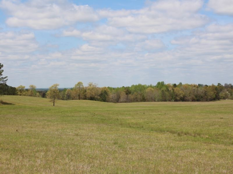 Pasture, Hay, & Hunting : Buena Vista : Marion County : Georgia