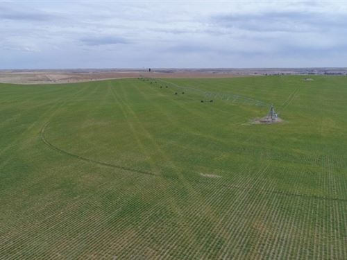 Potter Pivots, Range, And Home : Potter : Cheyenne County : Nebraska