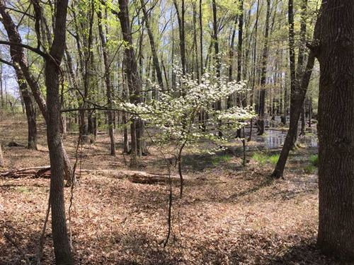 40 Wooded Acres Minutes From Greer : Heber Springs : Cleburne County : Arkansas