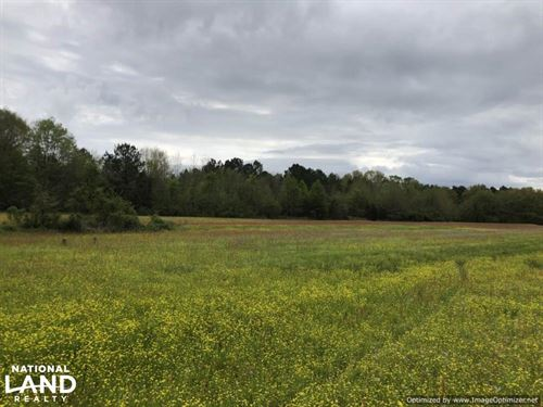 Great Home Site OR Pasture Land : Sallis : Attala County : Mississippi