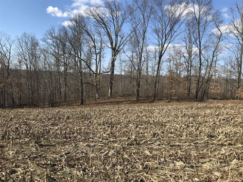 Patton Mills Rd, 13 Acres : Stockport : Washington County : Ohio