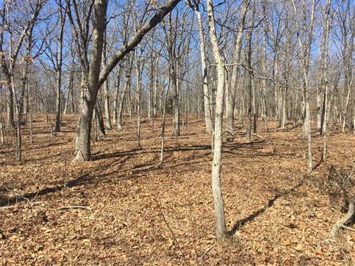 120 Acres Of Mature Timber & Hu : Cole Camp : Benton County : Missouri