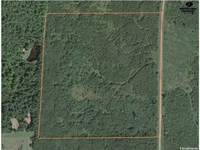 40 Acres of Hunting Land For Sale : Antigo : Langlade County : Wisconsin