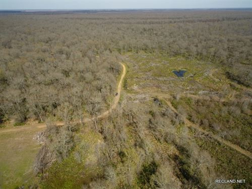 396 Ac - Hunting & Camp Site Wi : Newellton : Tensas Parish : Louisiana