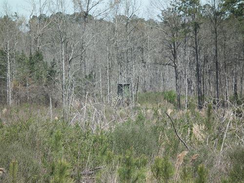 Henson Cemetary Road 81 : Dekalb : Kemper County : Mississippi