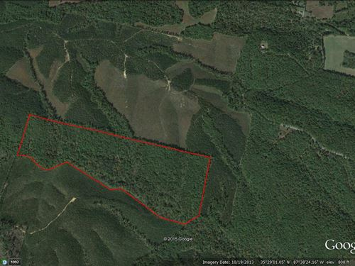81+ Secluded Acres With Creek : Hohenwald : Lewis County : Tennessee
