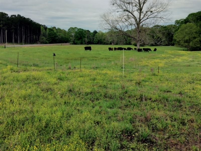 50 acres in simpson county ranch for sale braxton for Ranches for sale in mississippi