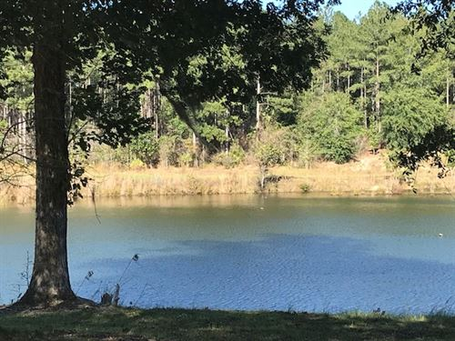 626 Acres Of Wooded And Open Land : Headland : Henry County : Alabama