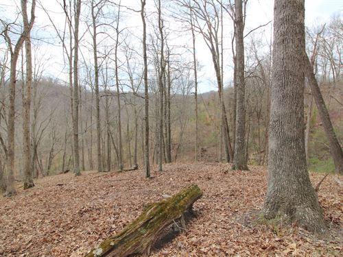 Cr 55 - 53 Acres : South Point : Lawrence County : Ohio