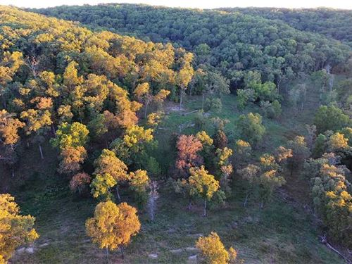32 Acres Timber/Pasture Mix in Ree : Reeds Spring : Stone County : Missouri