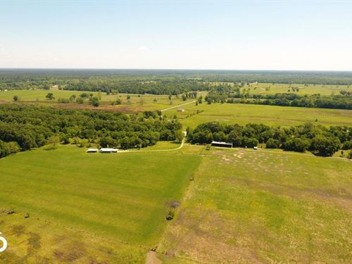 88 Acre Ranch/Recreational/Hunting : Shepherd : San Jacinto County : Texas
