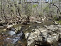 Price Reduced, 40 Acre Deer : Concord : Cleburne County : Arkansas