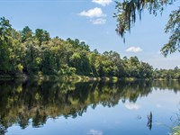 River Front Hunting Fishing Timber : Branford : Lafayette County : Florida