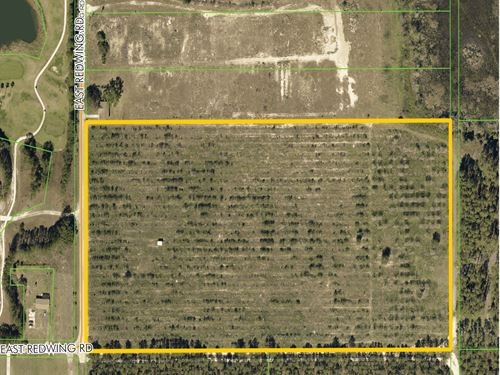 Redwing Homesite : Clermont : Lake County : Florida