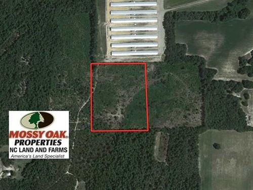 14.5 Acres of Hunting And Timber : Wagram : Scotland County : North Carolina