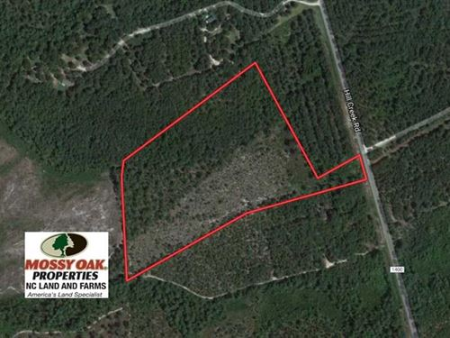 19.6 Acres of Hunting And Timber : Wagram : Scotland County : North Carolina