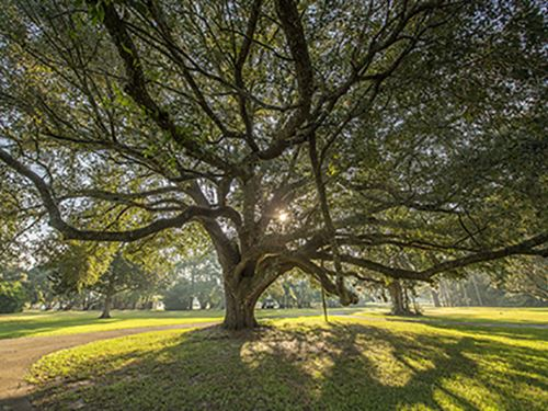 1680 Ac Bordering Mistletoe Plant : Thomasville : Thomas County : Georgia