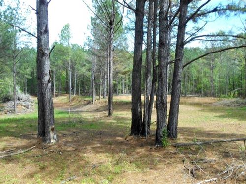 70 Acres In Leake County : Walnut : Leake County : Mississippi