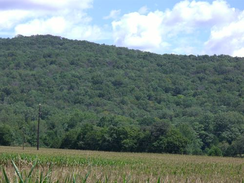 39.25 Acres Off County Road 119 : Woodville : Jackson County : Alabama