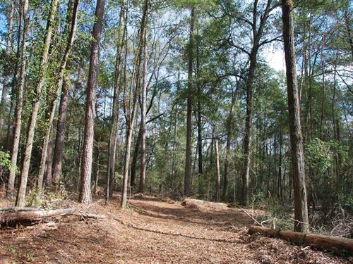 44 Acres With Beautiful House Site : Prattville : Autauga County : Alabama