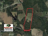 26.5 Acres of Farm And Timber Land : Whiteville : Columbus County : North Carolina