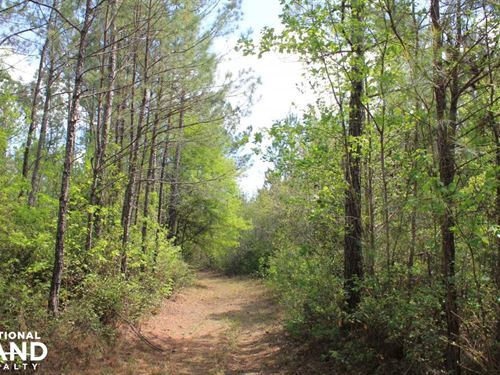 Shulerville 45 Acres : Shulerville : Berkeley County : South Carolina