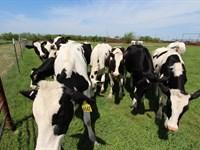Cattle & Horse Ranch On 247 Acres : Paris : Lamar County : Texas