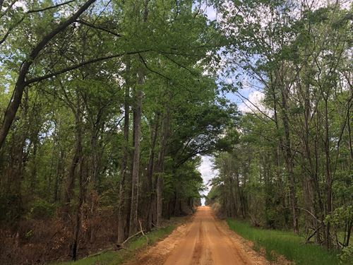 Timber Investment / Rec Tract : Bartow : Washington County : Georgia