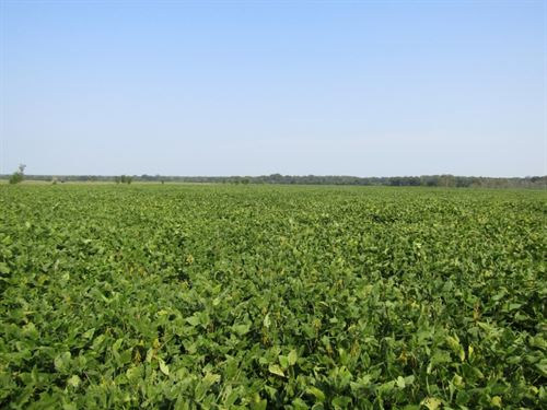 60 Acres In Monroe County, Ms : Prairie : Monroe County : Mississippi