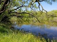 Poage Hill East Ranch : Throckmorton : Throckmorton County : Texas