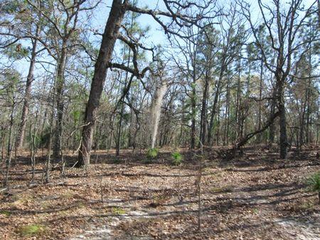 Wells Tract : Swainsboro : Emanuel County : Georgia