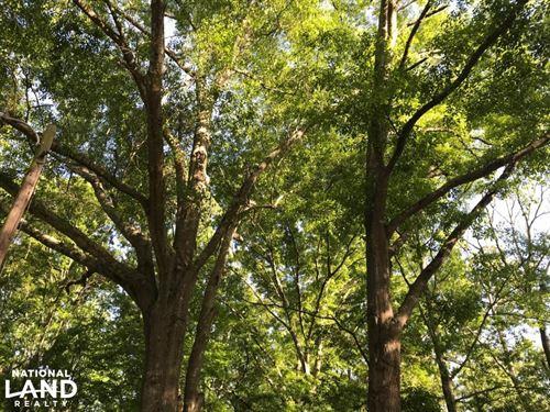 Rockdale Rare Old Growth Hard Woods : Conyers : Rockdale County : Georgia