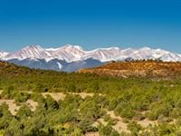 Wooded Mountain Homesite & Hunting : Trinidad : Las Animas County : Colorado