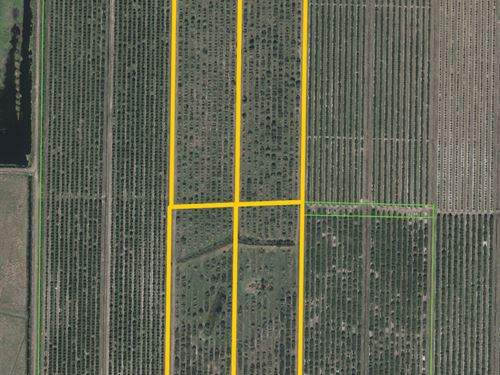 Highlands County Citrus Grove : Lorida : Highlands County : Florida