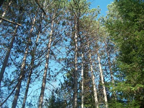 38.01 Acres, Tripoli, Oneida County : Tripoli : Oneida County : Wisconsin
