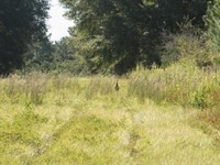 Suwannee River Hunting : Live Oak : Suwannee County : Florida