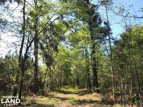 Bonneau Ridge Mini Farm : Bonneau : Berkeley County : South Carolina