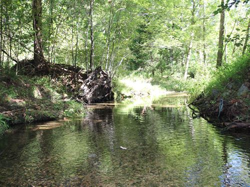 853 Acres On Bluewater Creek : Centerville : Hickman County : Tennessee